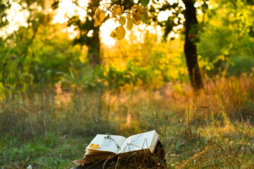Kuvassa kirja ja kaunis kesäilta