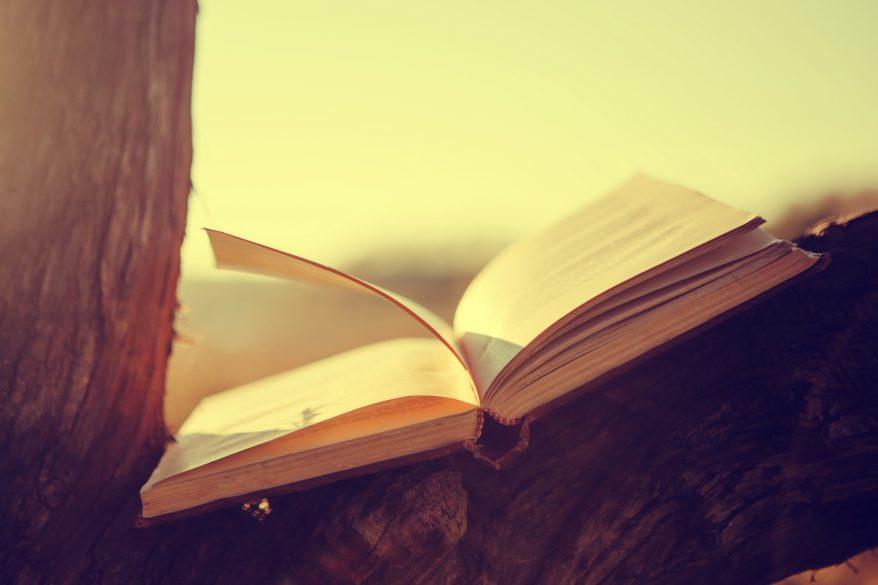 Open book on tree branch under sunbeams