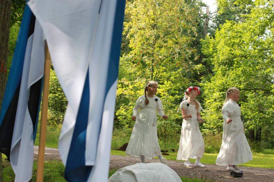 Viron tammi. Kuva Tuglas-seura
